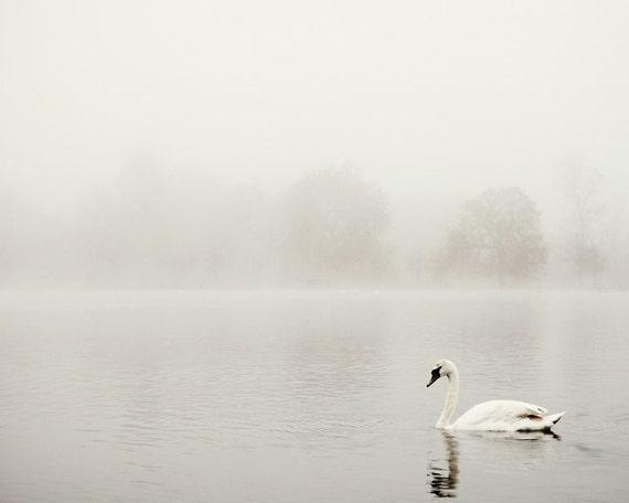 """White Swan Photo, Minimalist Nature Photography, Minimalist Wall Art, Monochromatic White Wall Decor """"Swan's Way"""""""