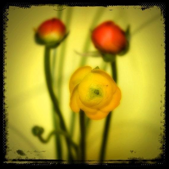 Fidgety Flowers - 8x8 Fine Art Print