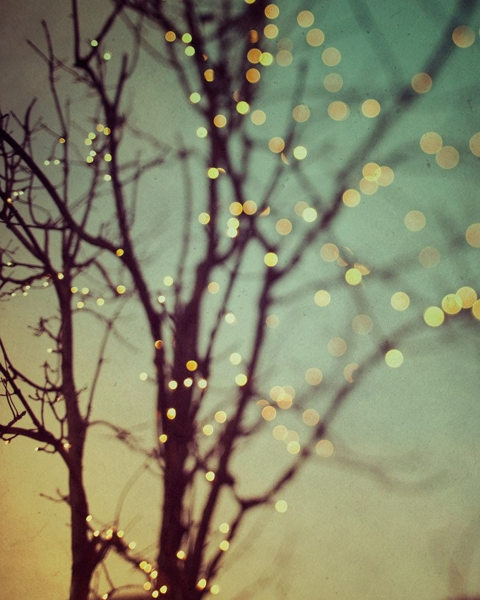String Lights On Tree Branches : Fairy Lights Large Abstract Art Print Fine Art Photography