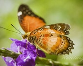 Painted Lady Butterfly on Purple Flower - Signed 8x10