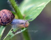 Slimmie snail  4x6