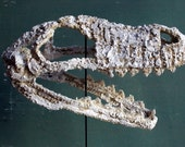 Crocheted Dinosaur Skull