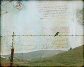 Hummingbird on barbed wire, 8 x 10 mixed media art print, room art...room decor...hummingbird print