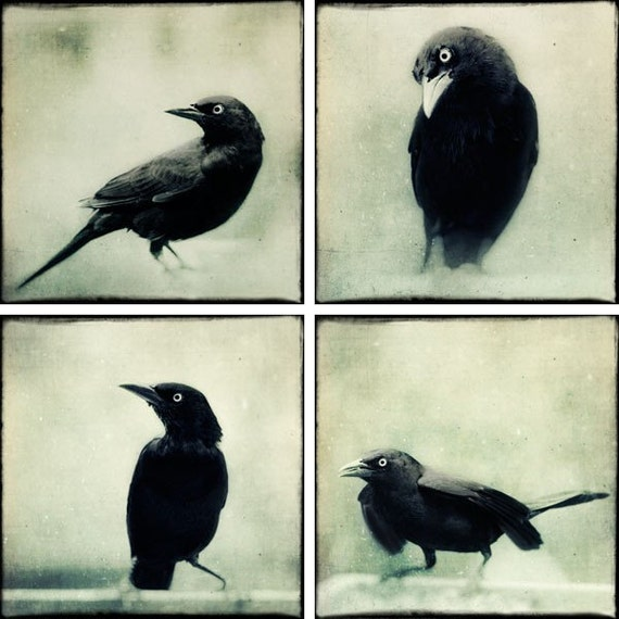 SALE - Grackles Print Set - Gothic Photos - Raven Art - Crow Photos - Gothic Art Prints - Black and White Photography Prints - Gothic Decor