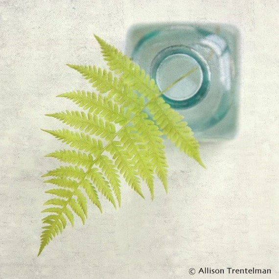 Fern No. 1, 7x7 Still Life Print - Free Shipping