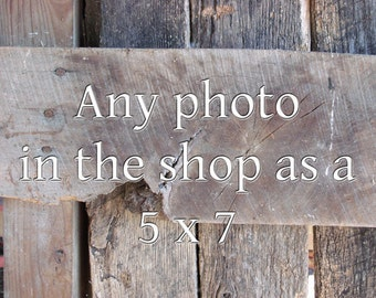 Any Photo in the Shop Printed as a 5x7, Farm wall art, Rustic, Tractor picture, Farm animal photo, Country photo, Farm photography