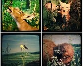 Nature Scenes through the viewfinder set of four Photographs