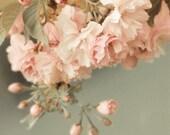WHEN SPRING COMES- Flower Fine Art Photograph 5x7