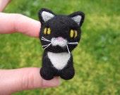 Sebastian the Little Black and White Kitty
