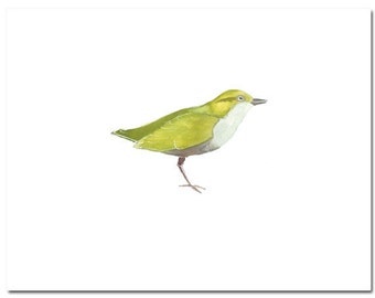 "Bird in Green--8""X10"" Fine Art Print"