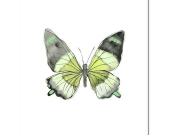 """Butterfly in Lime and Gray--8""""X10"""" Fine Art Print"""