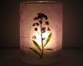 Purple Alyssum Earth Light