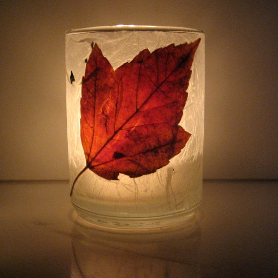 Real Autumn Red Maple Leaf Earth Light