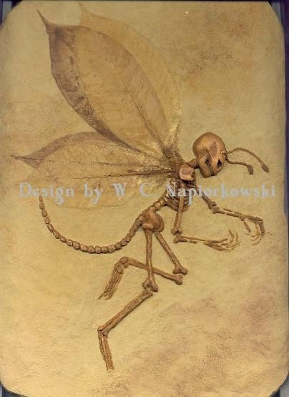 Fairy Fossil Specimen 1-2002-7