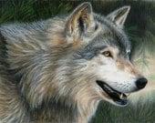 Wolf Art TIMBER WOLF Original Artwork by Carla Kurt
