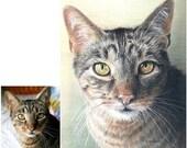 Hand-Drawn Custom Pet Portrait  8 x 10 Art by Carla Kurt cat dog horse memorial