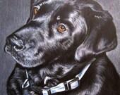 Memorial Pet Portrait 11 x 14 Colored Pencil Art Pet Portrait  cat dog horse memorial Custom Hand-drawn
