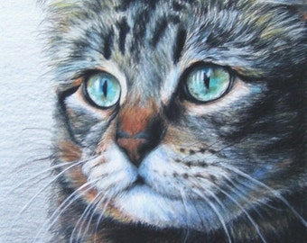 Cat Pet Portrait 8 x 10 Colored Pencil Art by Carla Kurt cat dog horse memorial Hand-Drawn Custom