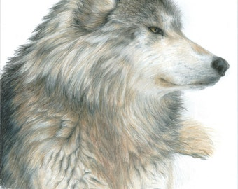 Wolf Art RELAXING WOLF print by Carla Kurt