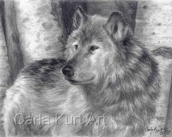 ORIGINAL drawing Wolf Number 6 by Carla Kurt