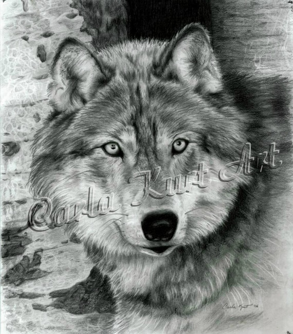 Wolf art print watchful eyes by carla kurt signed wwao ebsq for Disegni di lupi da stampare