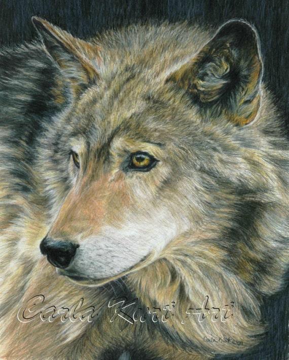 Wolf Art CURIOUS EYES by Carla Kurt Signed Wolf Print 11 x 14