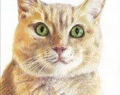 Custom colored pencil cat pet portrait by Harry 8 x 10