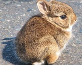 wittle baby bunny 5x7 matted print