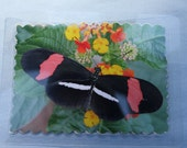 Laminated 3x4 original photographic print butterfly poem card