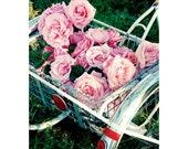 Roses - 5- Postcard Set