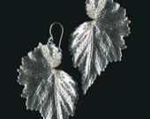 Begonia leaf earrings
