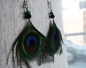 real peacock earrings