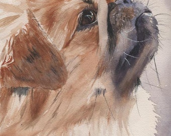 Pekingese Dog Art Print of my watercolor painting
