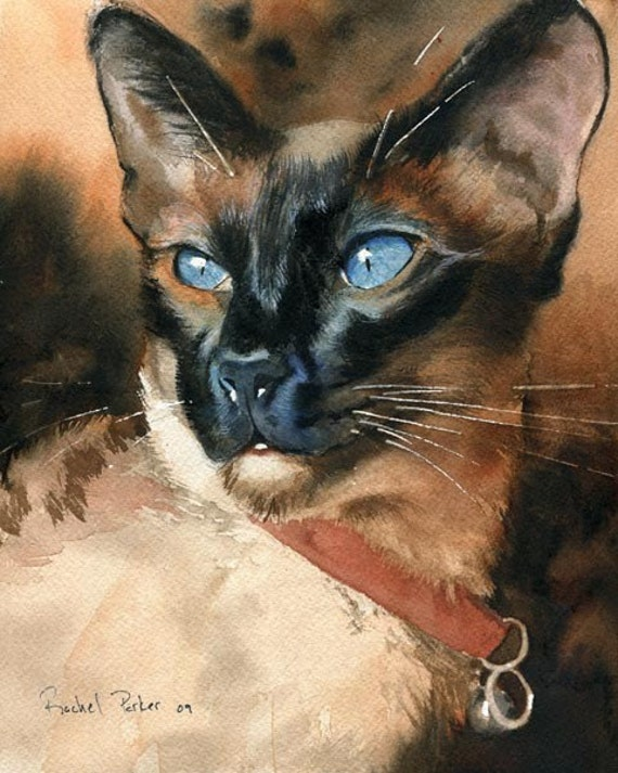 Siamese Cat Seal Point Art Painting Print of my watercolor painting Artwork by Artist Rachel Parker