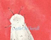 Original acrylic painting - Muslin Moth (female)