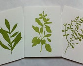 kitchen herbs note cards (multi set)