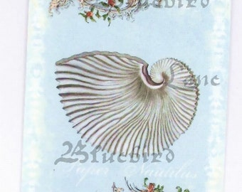 Gift Tags - Nautilus Shell - Shell Tags - Beach Wedding Tags - Seashell Tags - Beach Tags
