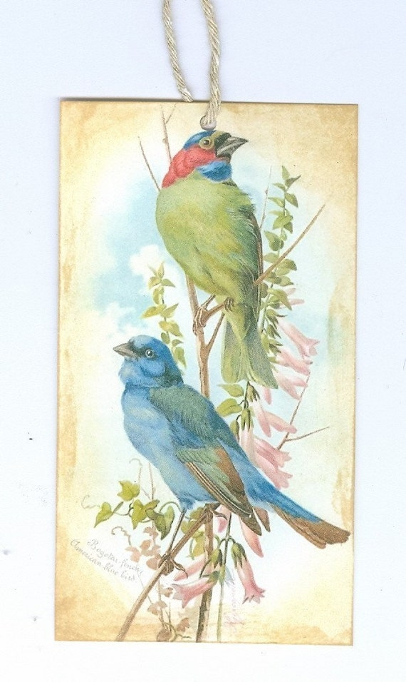 Vintage Image Bluebird And Finch Tag Or Embellishment