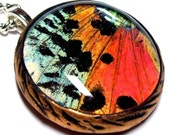 ON FIRE - Real Butterfly Wing Necklace - Madagascan Sunset Moth