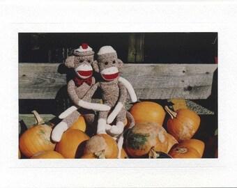 Sock Monkeys on Pumpkins
