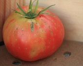 Stump of the World Heirloom Tomato Seeds