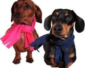 Eco Pet Scarf - Recycled Fleece - Extra Small