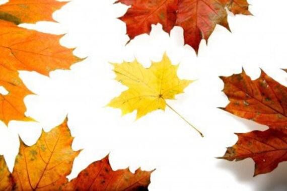 EarthSchool curriculum - Unbe-leaf-able Leaves