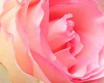 A BLUSH OF ROSE Elemental Fine Art Photography