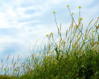 KISS THE SKY Fine Art Print Nature's blue, green and yellow