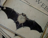 Vintage Halloween Bat Gift Tag Natural History Cabinet Curiosity