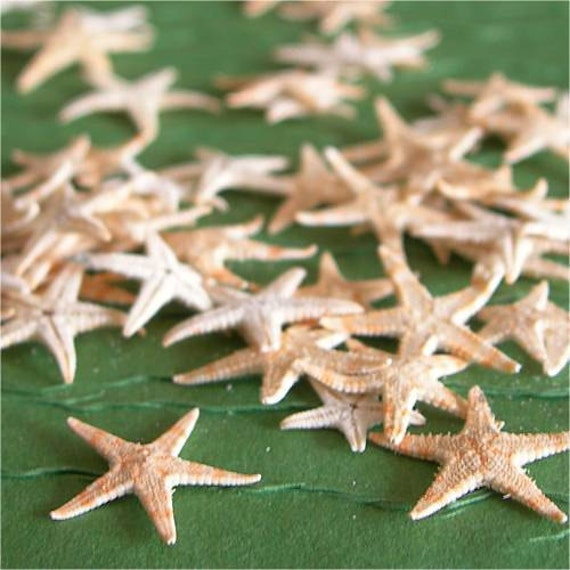 Petite Real Sugar Starfish lot of 30 NATURAL ELEMENTS