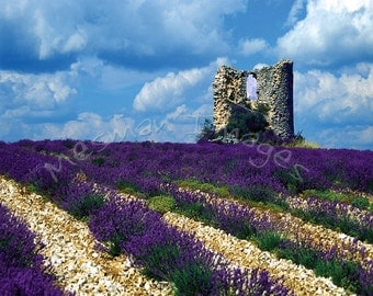 Lavender Field Print, France Photography, Landscape of Wind Mill