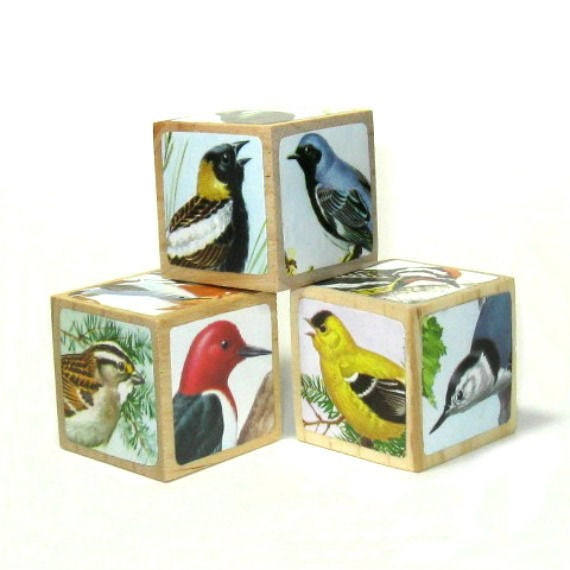 Natural History Bird Art Blocks Home Decor Bird Decoration