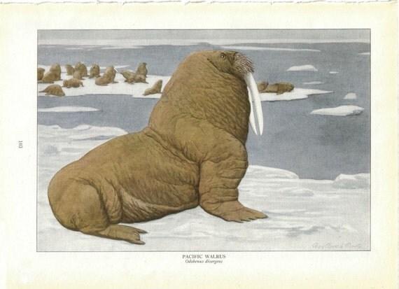 Marine Mammals Vintage Ephemera Walrus Manatee Seal Whale
